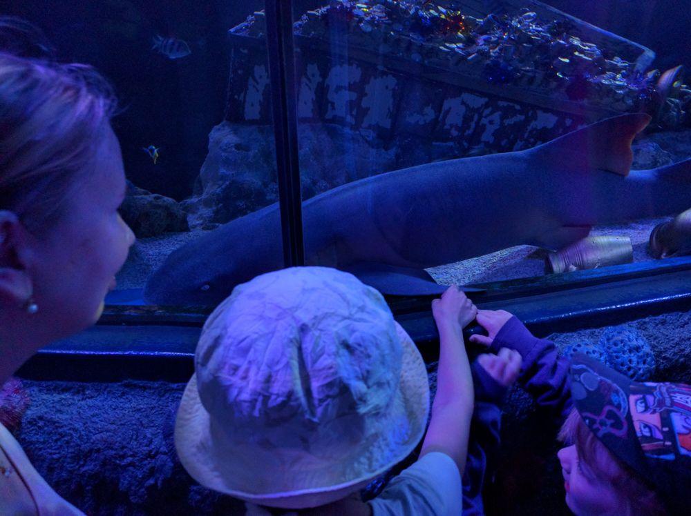 žralok v tunelu