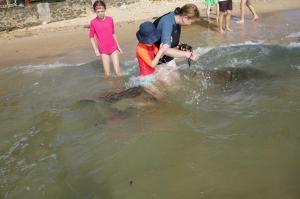 Krmení želv ve vlnách