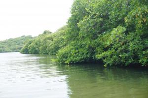 Řeka se stromy